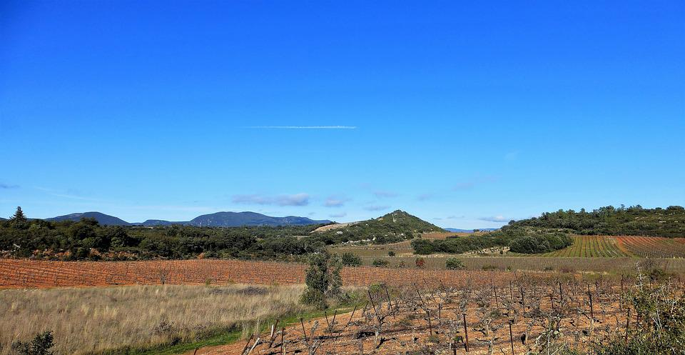 France, Aude, Nature, No Person, Outdoor, Sky, Vine