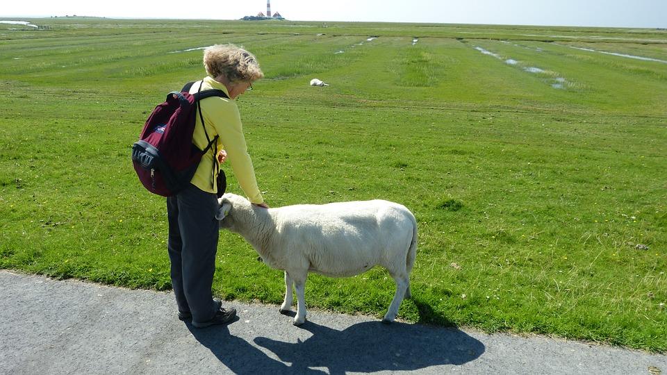 North Sea, Wadden Sea, Animal World, Nature