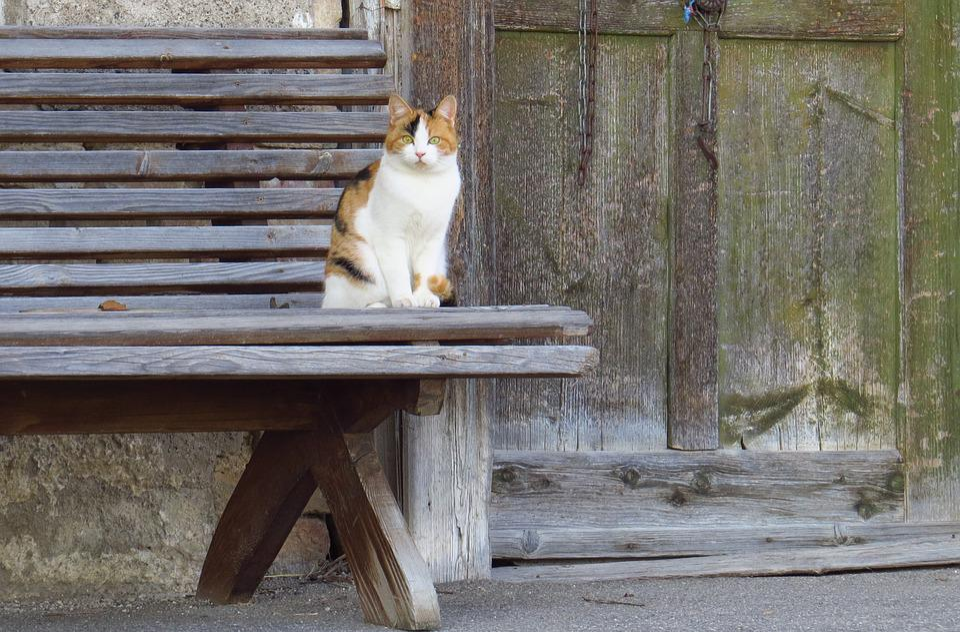 Cat Cat, Animals, Bank, Door, Old, Nature, Pets
