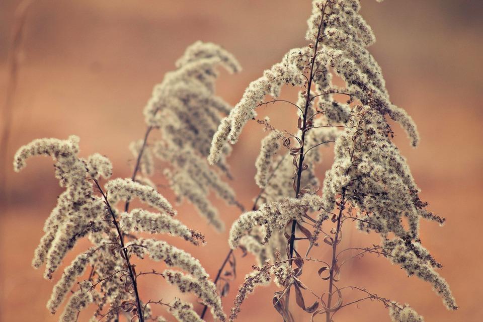 Nature, Weeds, Woods, Orange, Wild Plant, Bloom
