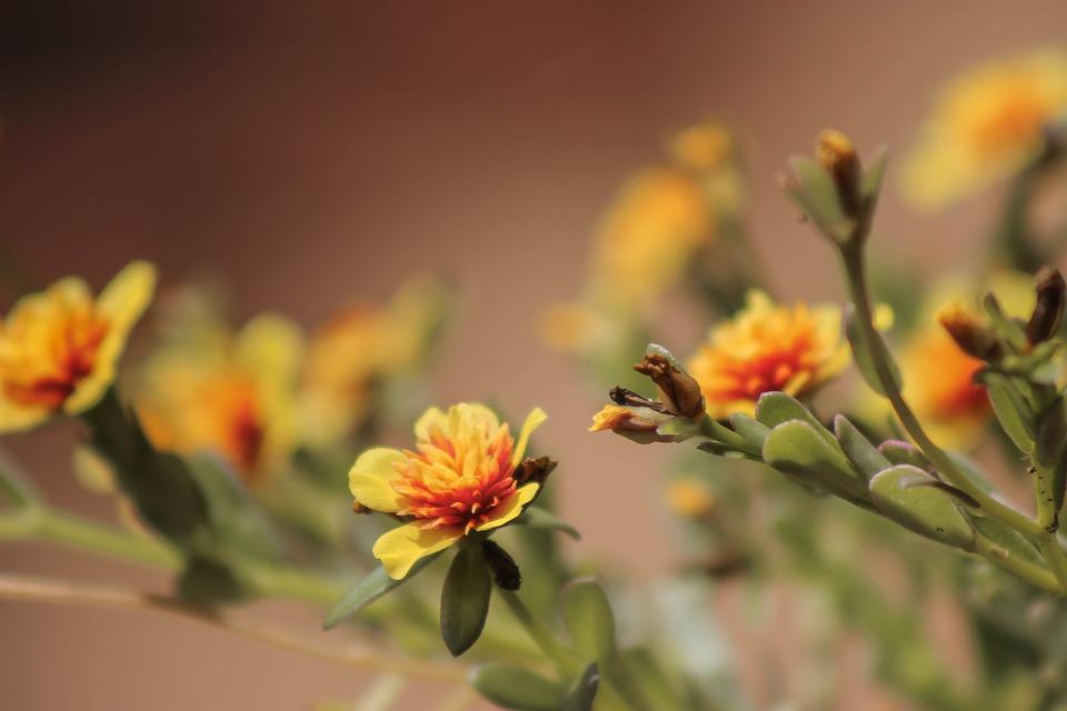 Flower, Orange Flowers, Love, Summer, Flora, Nature