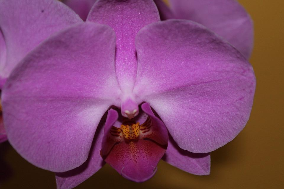 Orchid, Blossom, Bloom, Close, Nature, Flower, Plant