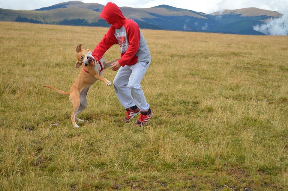 Transalpina, Nature, Joy, Dog, Outdoor, Mountain