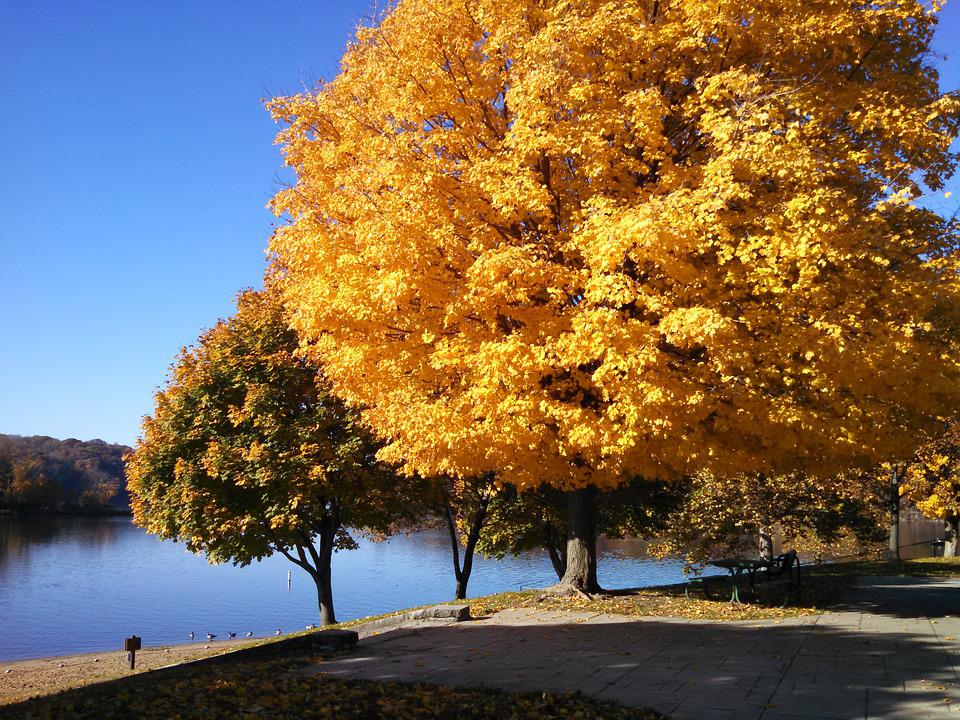 Fall, Autumn, Colorful, Nature, Trees, Outdoors, Color