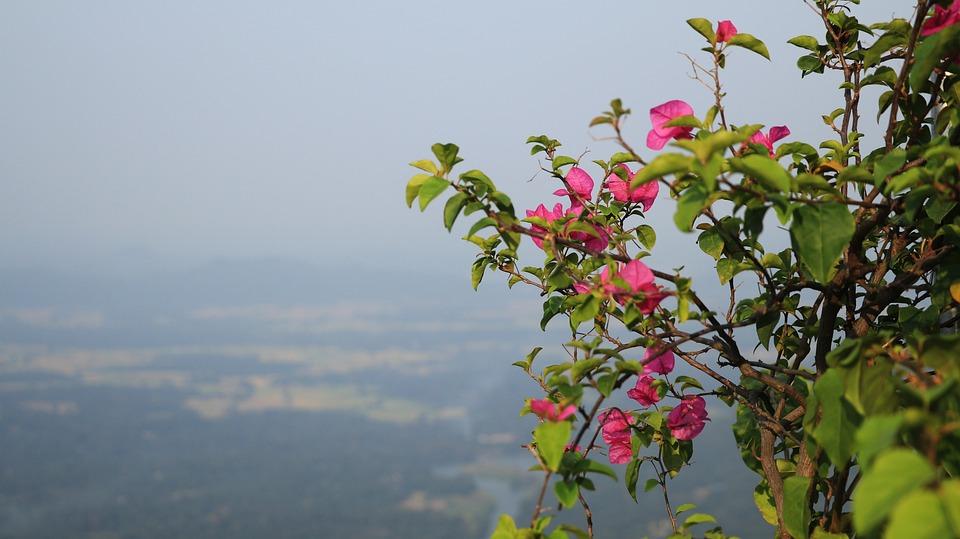 Nature, Tree, Flora, Summer, Leaf, Flower, Outdoors