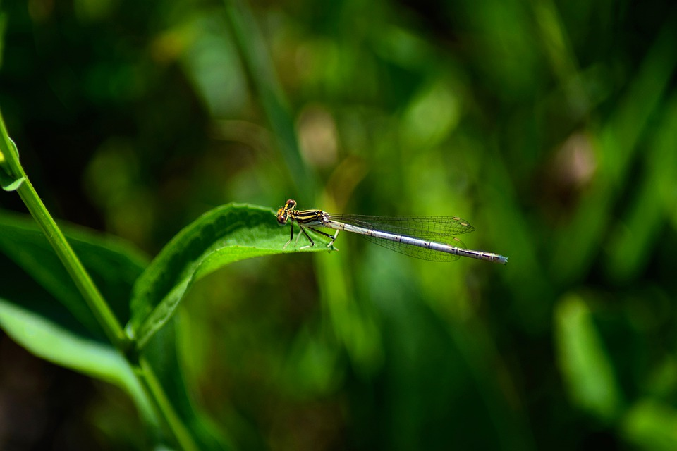 Dragonfly, Little, Nature, Insect, Outdoors, Plant