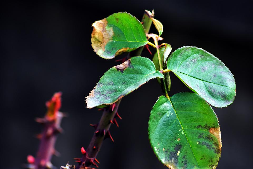 Leaf Plants, Nature, Plant, Nobody, Outdoors
