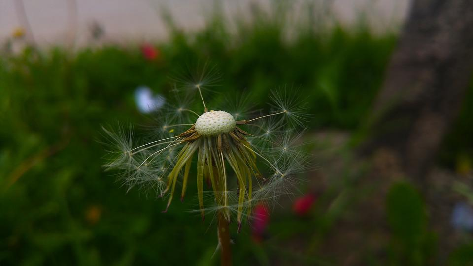 Nature, Plant, Outdoors, Summer, Lawn