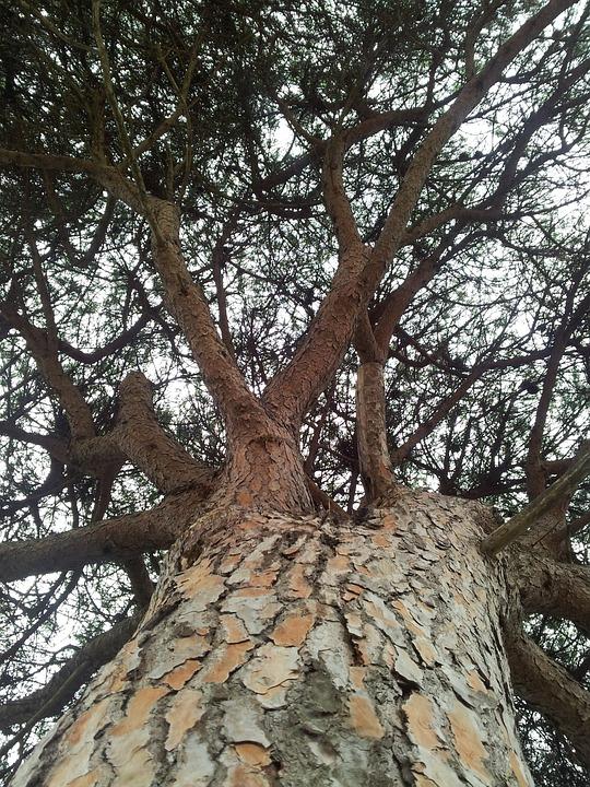 Tree, Nature, Trunk, Trees, Pa, Vegetation, Landscape