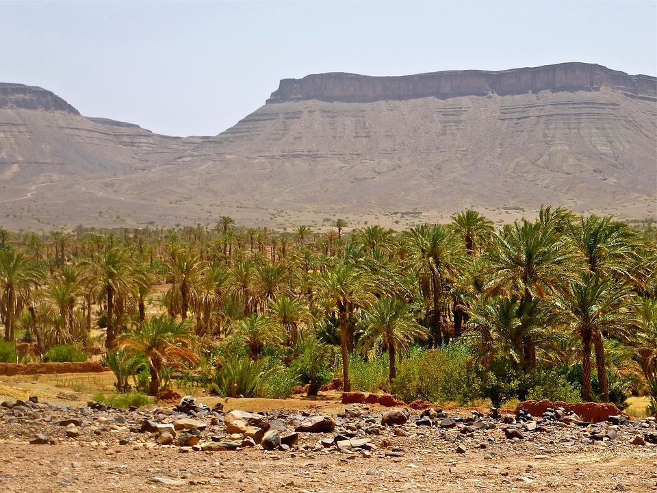 Palm Grove, Morocco, Landscape, Africa, Marroc, Nature