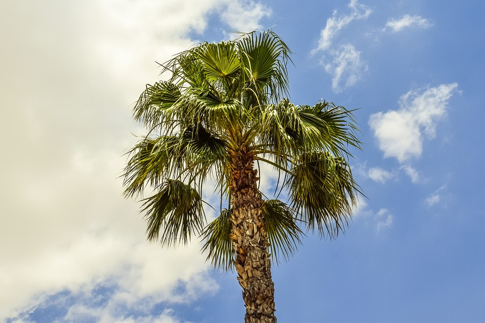 Palm Tree, Wind, Sky, Clouds, Nature, Exotic