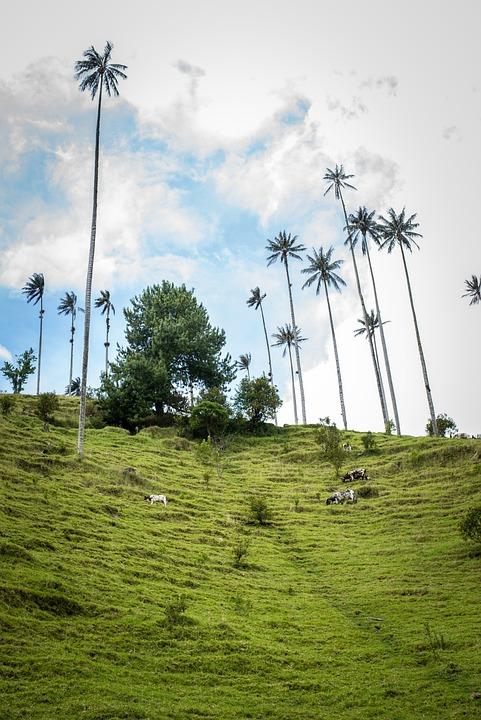 Nature, Sky, Mountain, Palm Trees, Salento, Quindío