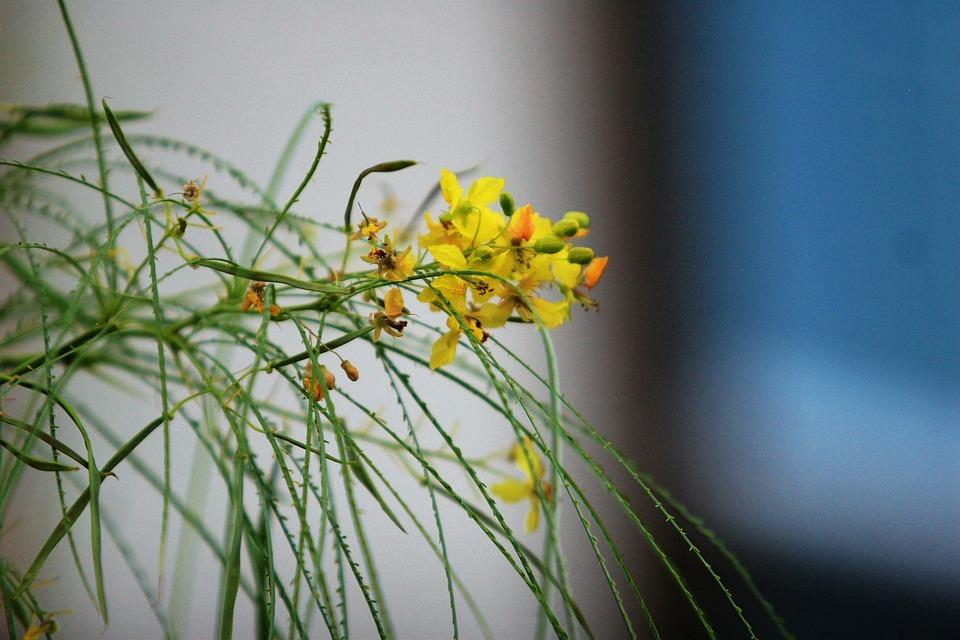 Palo Verde, Jerusalem Thorn, Branch, Tree, Nature
