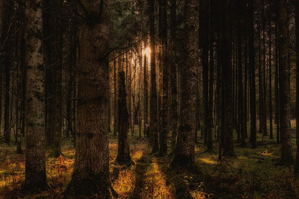 Forest, Trees, Landscape, Nature, Panorama, Mood