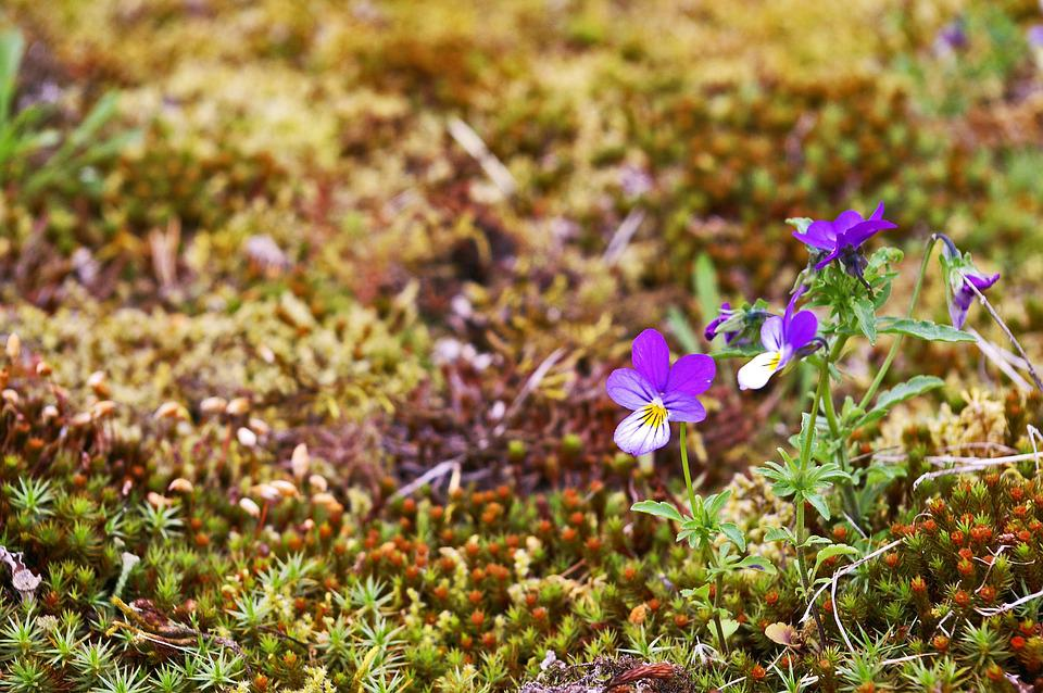 Nature, Moss, Green, Plant, Fouling, Background, Pansy
