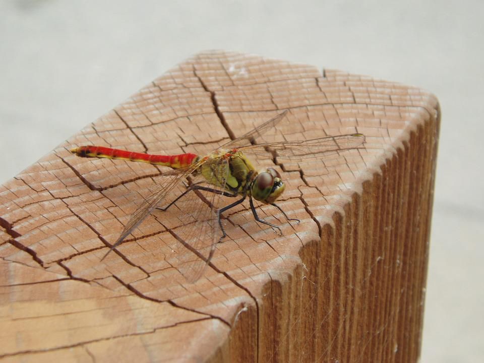 Dragonfly, Insects, Wing, Autumn, Park, Nature