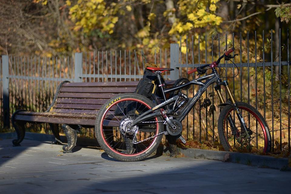 Bike, Park, Autumn, Entertainment, Nature, Marin