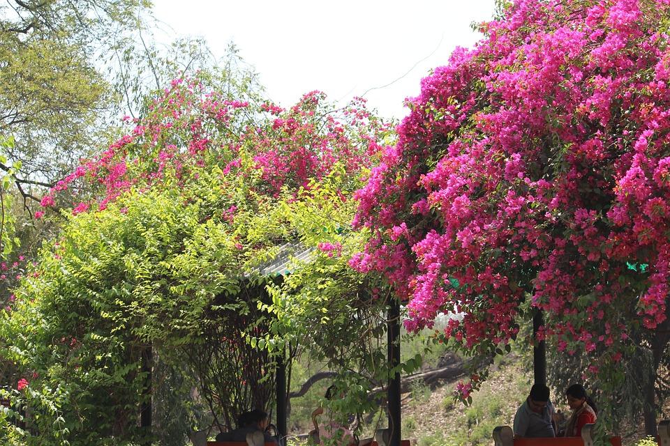 Tree, Nature, Flower, Flora, Park, Garden, Season, Leaf