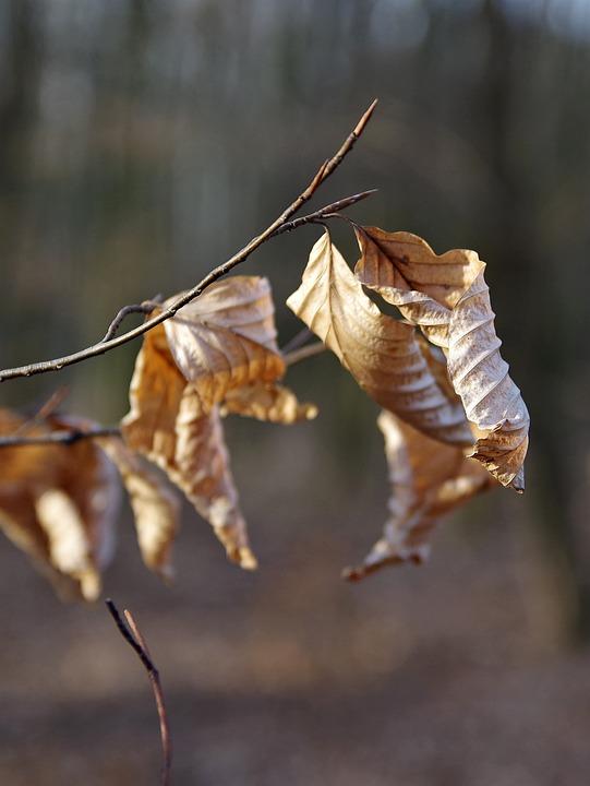 Nature, Leaf, Tree, Autumn, Branch, Garden, Park