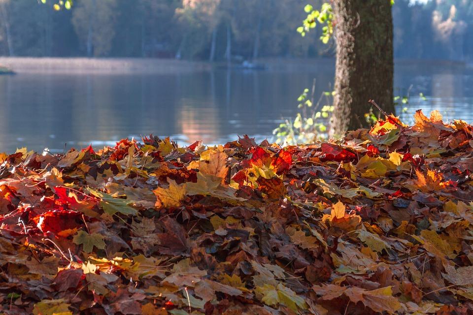 Autumn, Leaf, Maple, Tree, Nature, Park