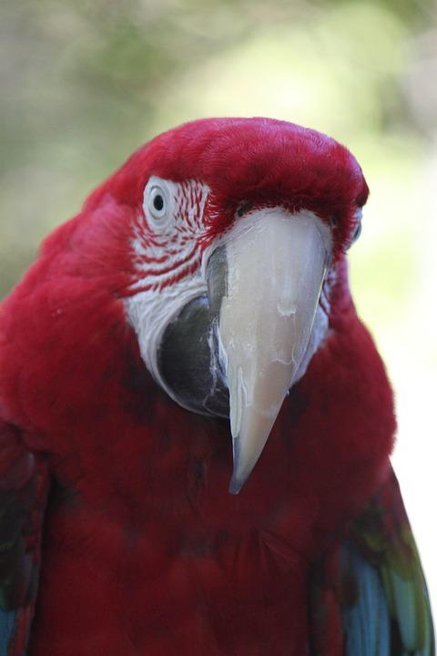 Parrot, Bird, Nature, Pet, Macaw