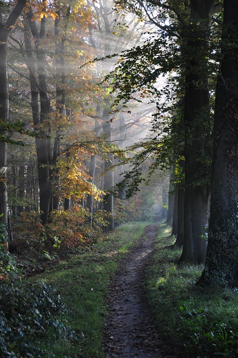 Path, Forest, Trees, Sunbeams, Country, Fog, Nature