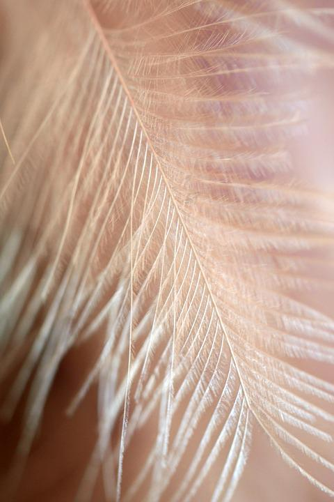 Nature, Pattern, Background, Feather, Texture