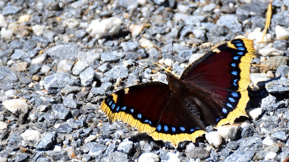 Butterfly, Pebble, Nature