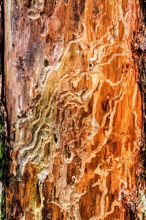 Nature, Bark Beetles, Wood Worm, Pest, Damaged, Log