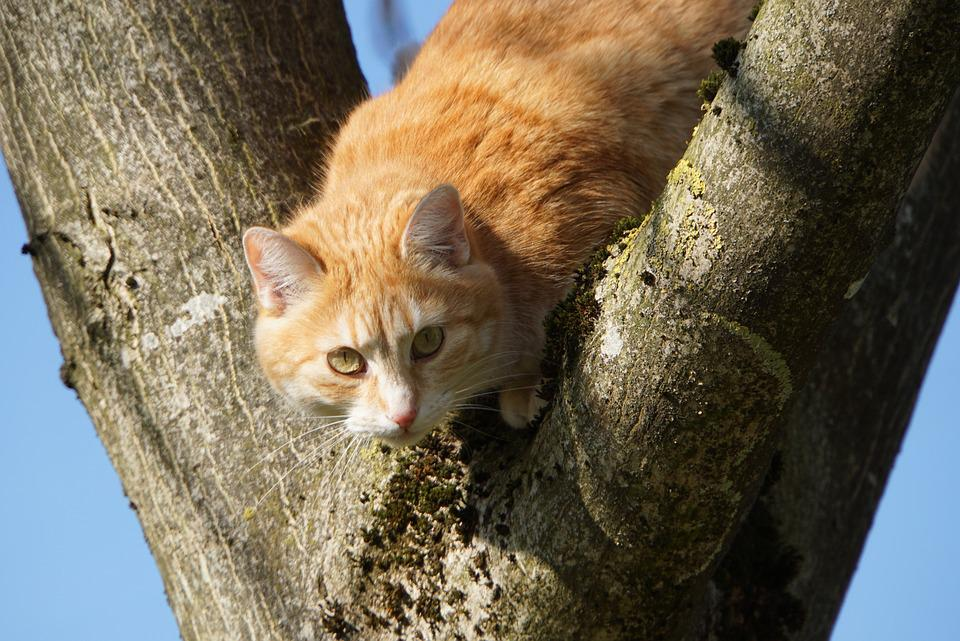 Everything In Sight, Cat, Pet, Nature, Purry, Attention