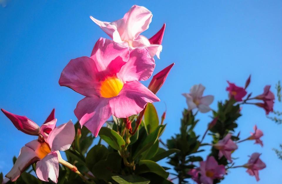 Flower, Flora, Nature, Summer, Petal