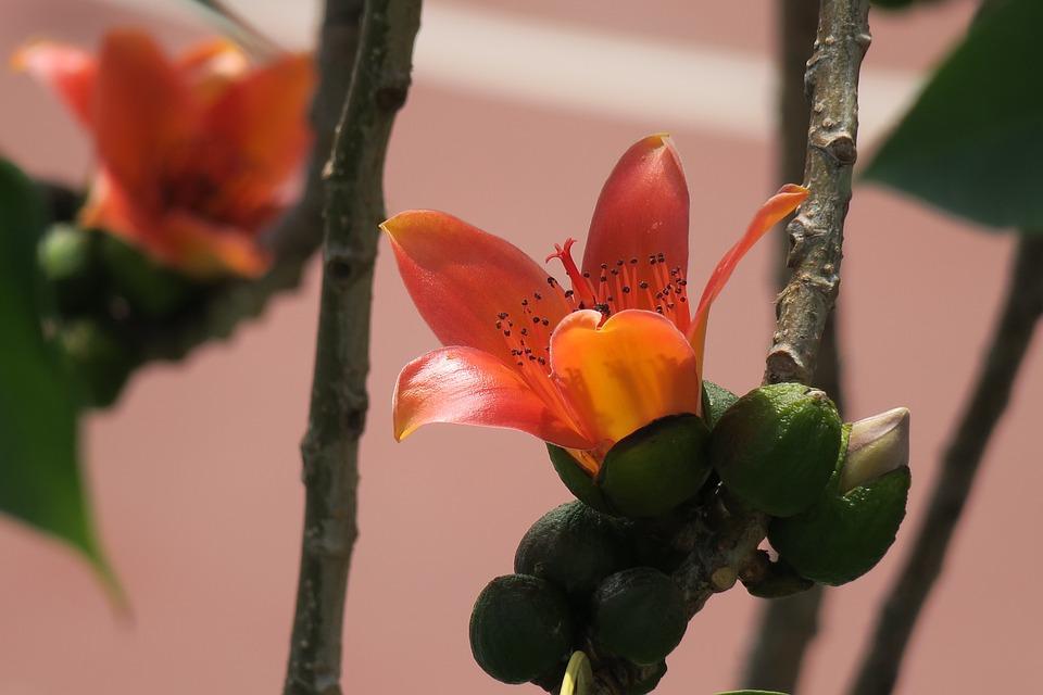 Flower, Nature, Plant, Garden, Leaf, Bloom, Petal
