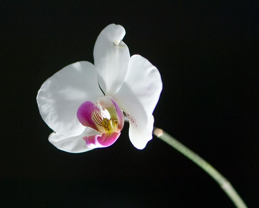 Flower, Plant, Nature, Petal