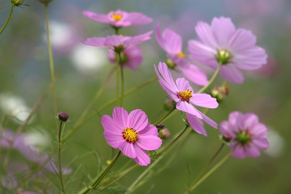 Nature, Flowers, Plants, Summer, Petal
