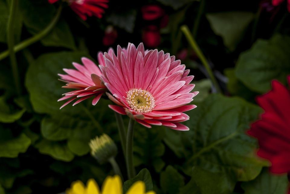 Beautiful Flower, Flower, Plant, Nature, Petal