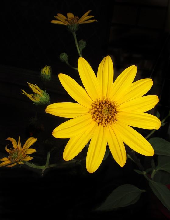 Flower, Summer, Flora, Nature, Petal