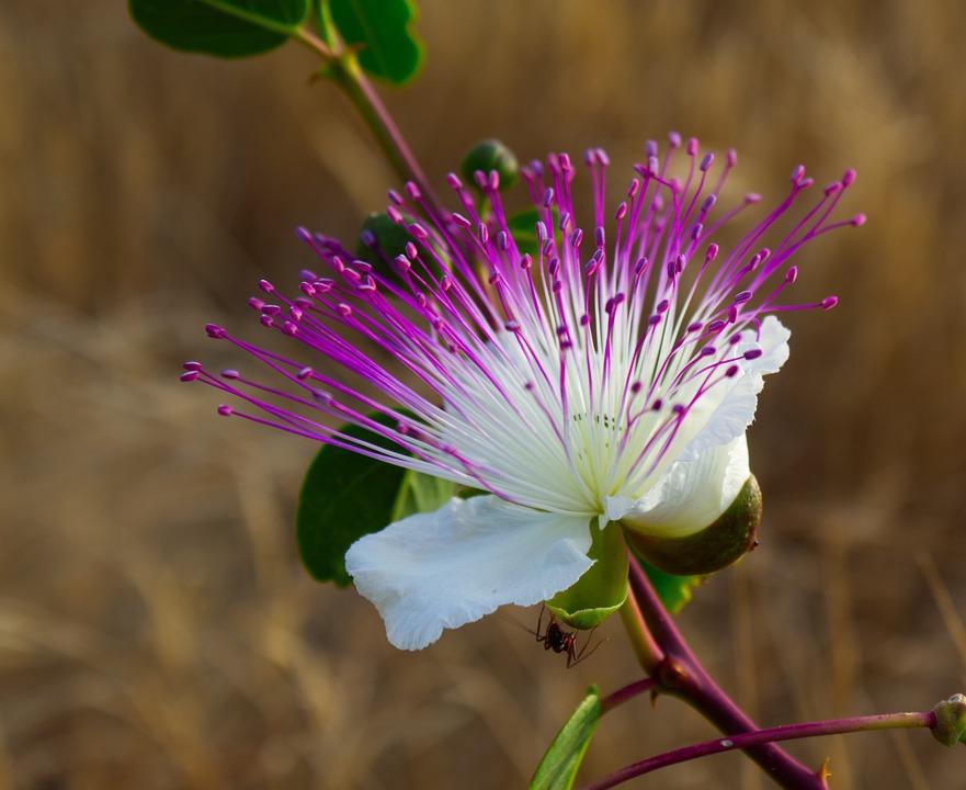 Flower, Purple, White, Bloom, Blossom, Nature, Petals