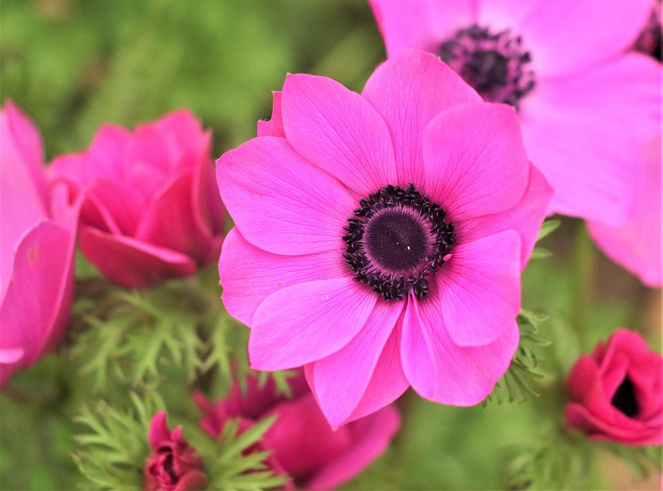 Flowers, Plant, Nature, Garden, Blossom, Petals