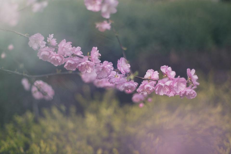 Flower, Pink, Meadow, Branch, Petals, Nature