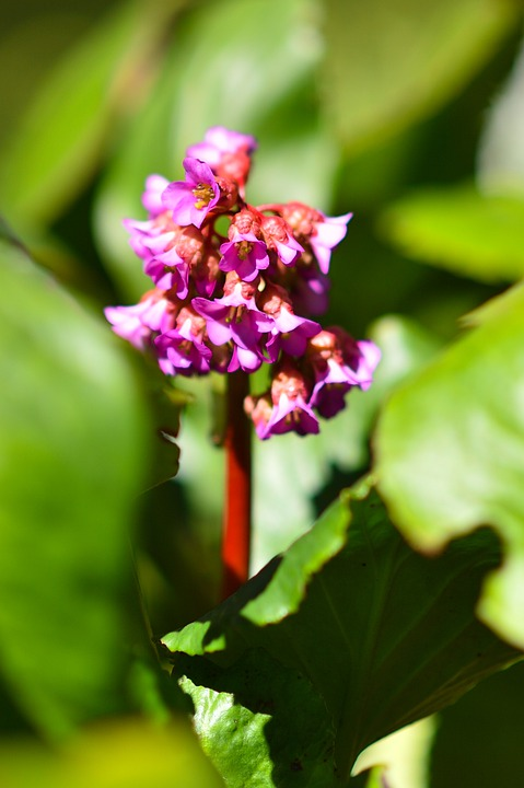 Flower, Spring, Nature, Plant, Bloom, Blossom, Pink