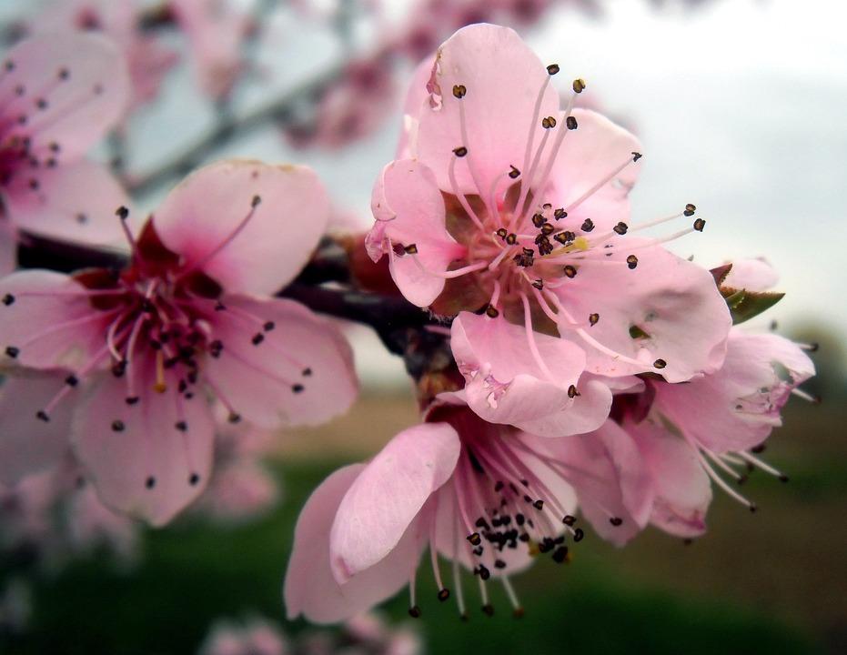 Flower, Nature, Plant, Branch, Pink, Season