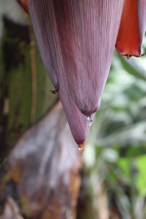 Nature, Plant