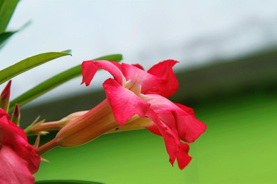 Flower, Nature, Tropic, Blossom, Plant, Bloom, Summer