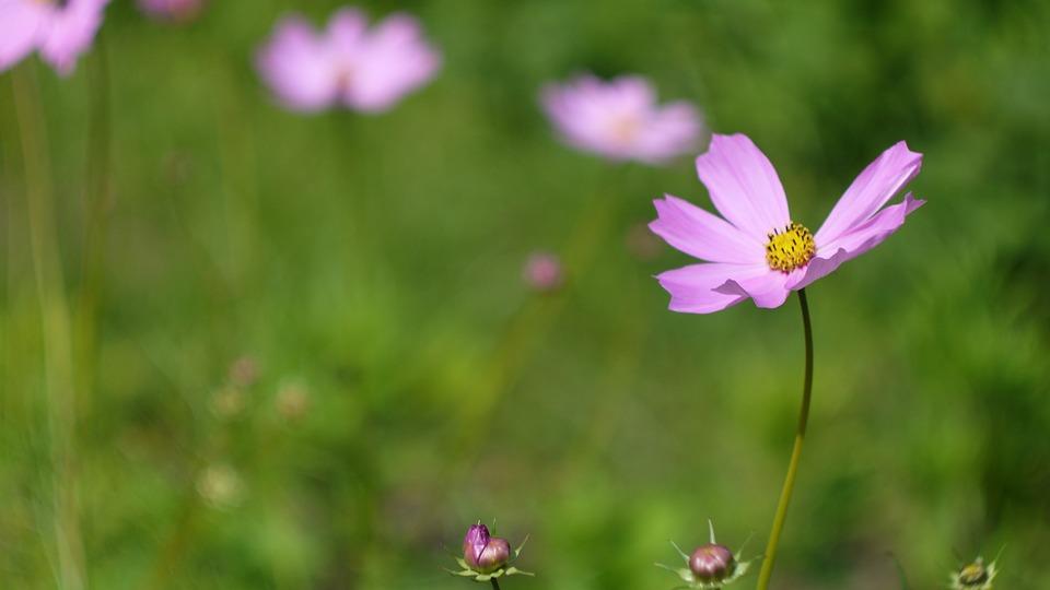 Nature, Flower, Plant, Summer, Grass, Field, No One