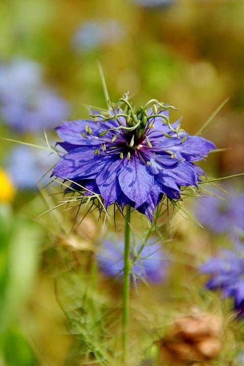 Nature, Plant, Field, Summer, Juffertje In 't Groen