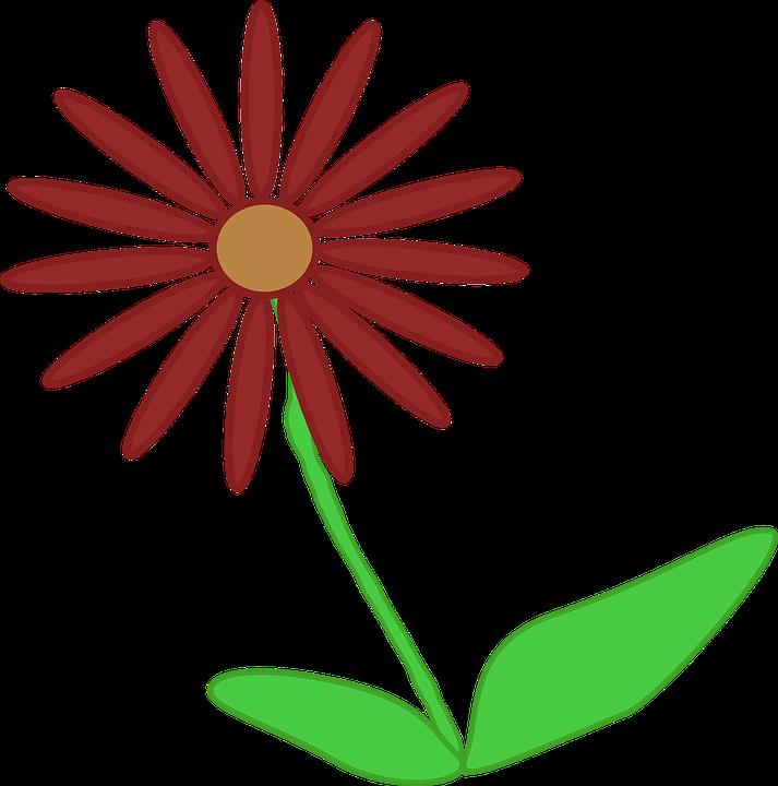 Flower, Plant, Nature, Beautiful, Flora