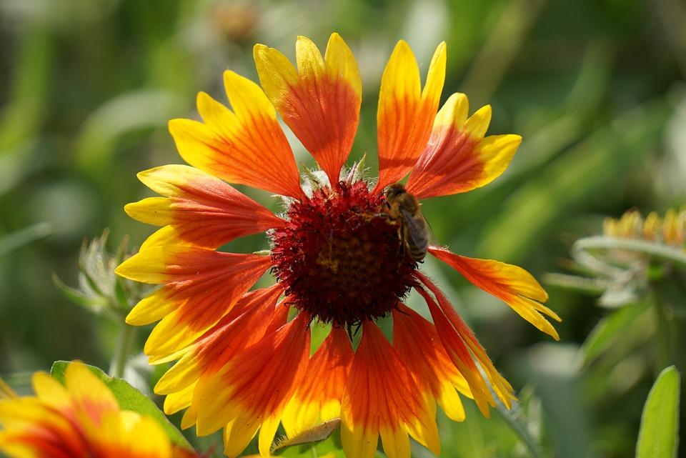 Flower, Plant, Nature, Blossom, Bloom, Summer, Garden