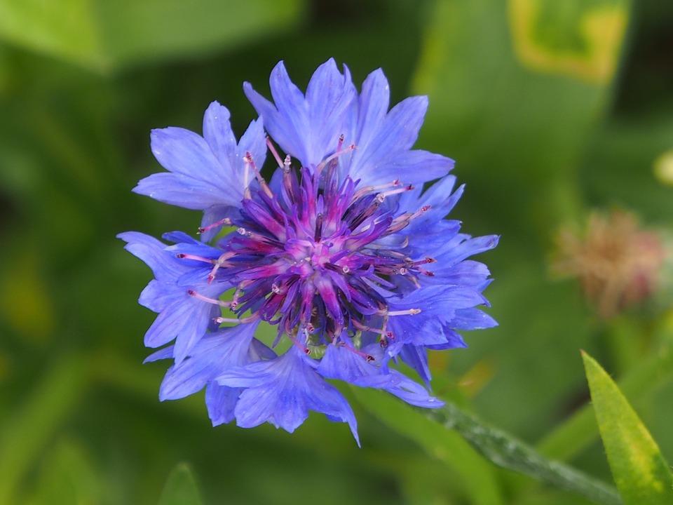 Nature, Flower, Summer, Plant, Garden, Close, Flowers