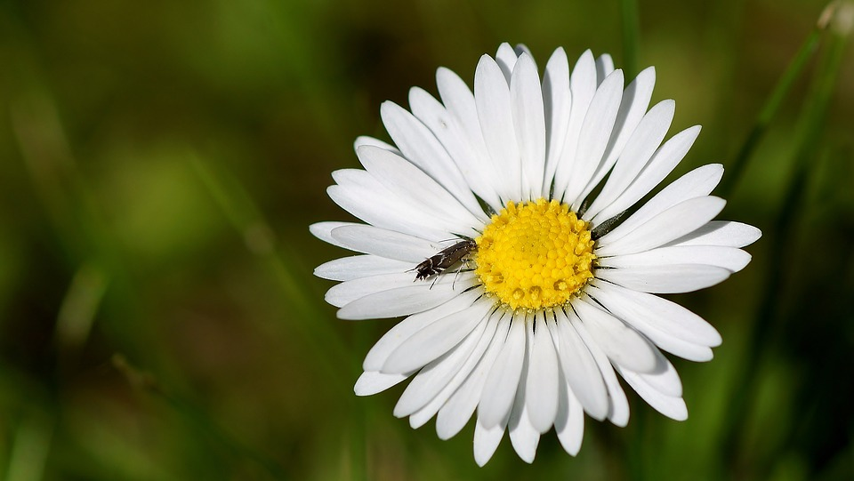 Nature, Insect, Plant, Flower, Summer