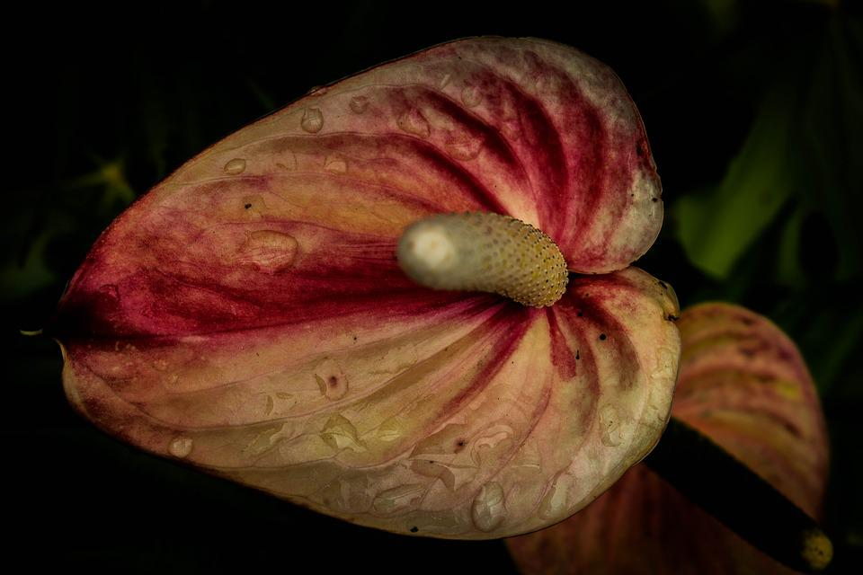 Nature, Plant, Flower, No Person